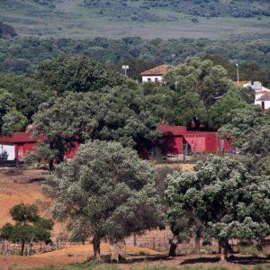 Tentadero Ganaderia Gavira